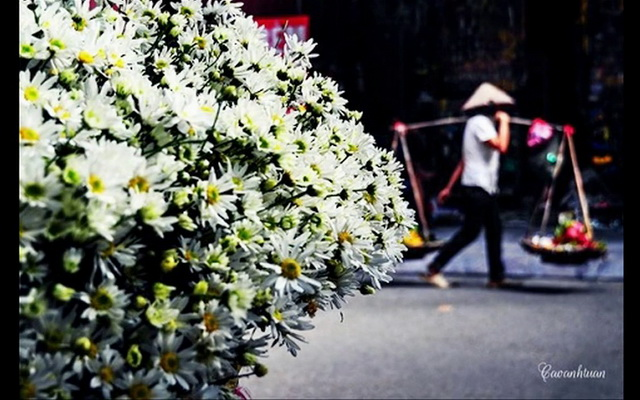 Cảm xúc đặc biệt dành cho tháng 11 : Đất trời cuối thu khoác lên mình chiếc áo rực rỡ hương sắc của các loài hoa tam giác mạch, dã...